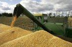 خرید تضمینی گندم و دانه های روغنی در خوزستان