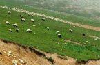 دامداران آذربایجان غربی از چرای دام در مراتع خودداری کنند