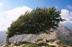 وزش باد روز طبیعت زنجان را درمینوردد