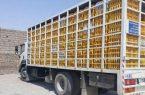 کشف ۵ تن مرغ قاچاق در رامهرمز خوزستان