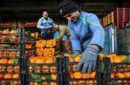 ۴۰۰ تن میوه شب عید در کردستان توزیع شد