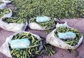 کشف ۳۶ کیلوگرم تریاک در بار خیار  در میدان بار کرمانشاه