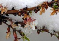سرمازدگی ۳۵ هزار میلیارد ریال خسارت به کشاورزی یزد وارد کرد