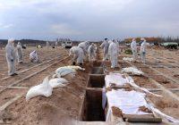 داغ کرونا بر دل ۸۰ خانواده در اردبیل/۶۰۲ نفر بستری شدند